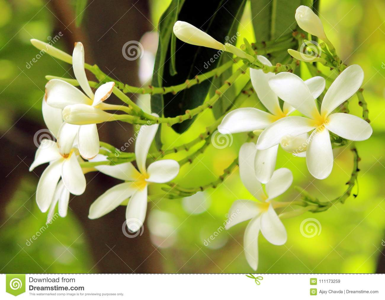 White Yellow Flower And Green Leaf Stock Image Image Of Color