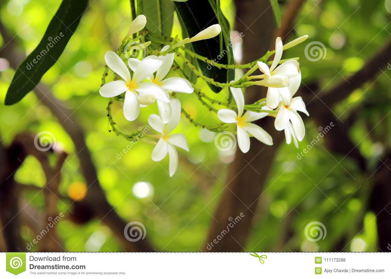White Yellow Flower And Green Leaf Stock Photo Image Of Grow