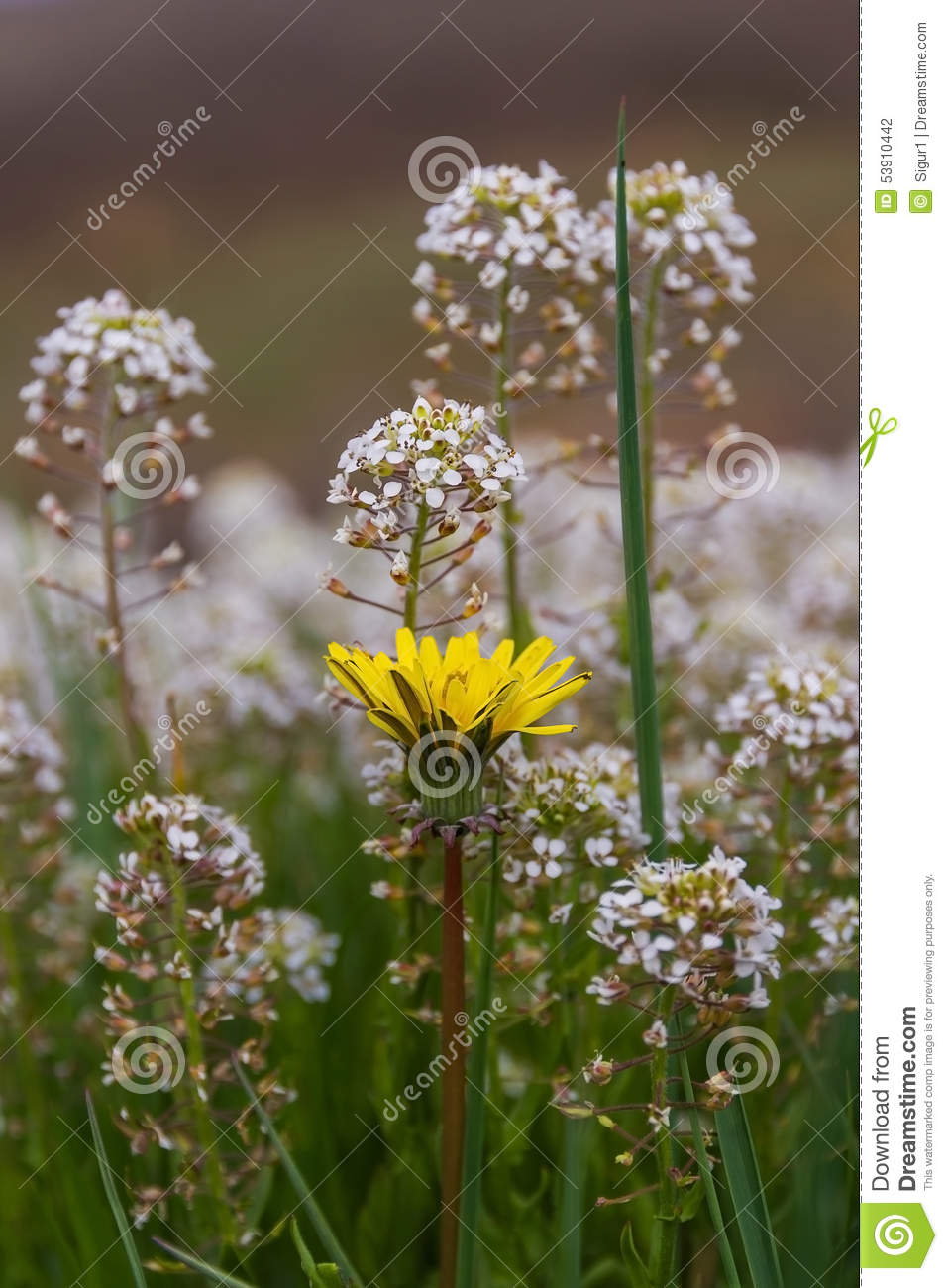 White And Yellow Flowers In Meadow Stock Photo Image Of Outdoors