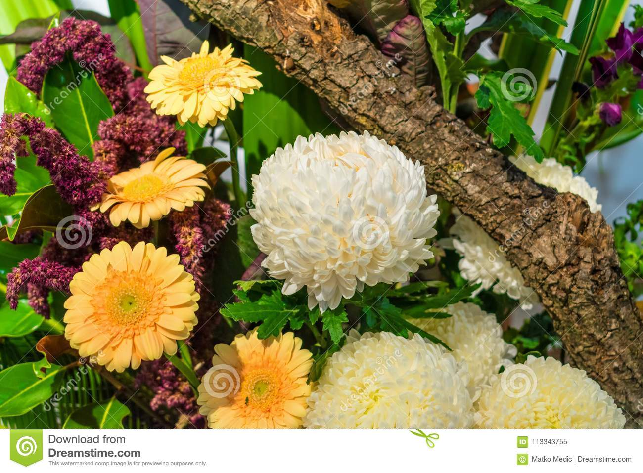 White And Yellow Flowers With Tree Branch Stock Image Image Of
