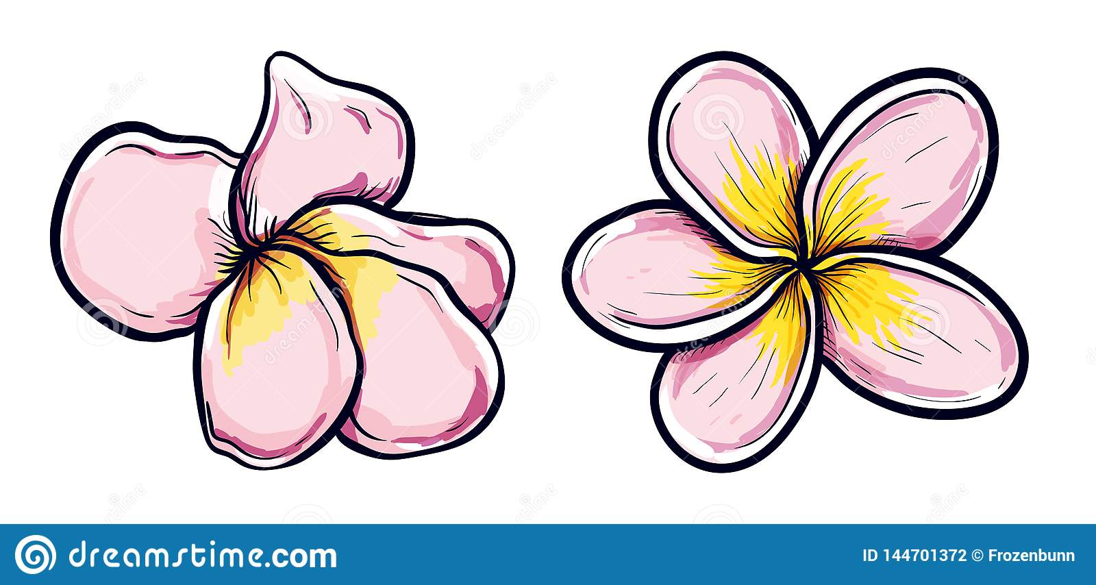 White And Yellow Plumeria Flowers In Drawing Style On White Background Vector Illustration Set Tropical Flowering Plants Stock Vector Illustration Of Frangipani Beautiful 144701372