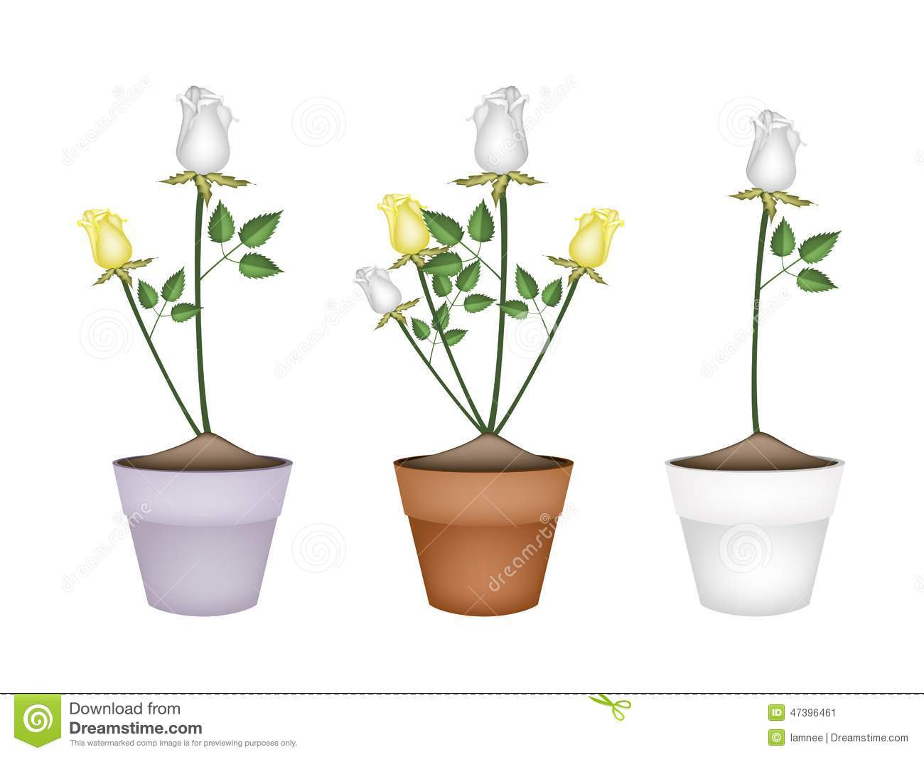 White And Yellow Roses In Ceramic Flower Pots Stock Vector
