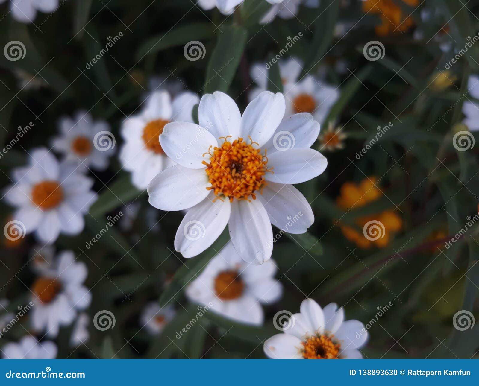 Silver flower button