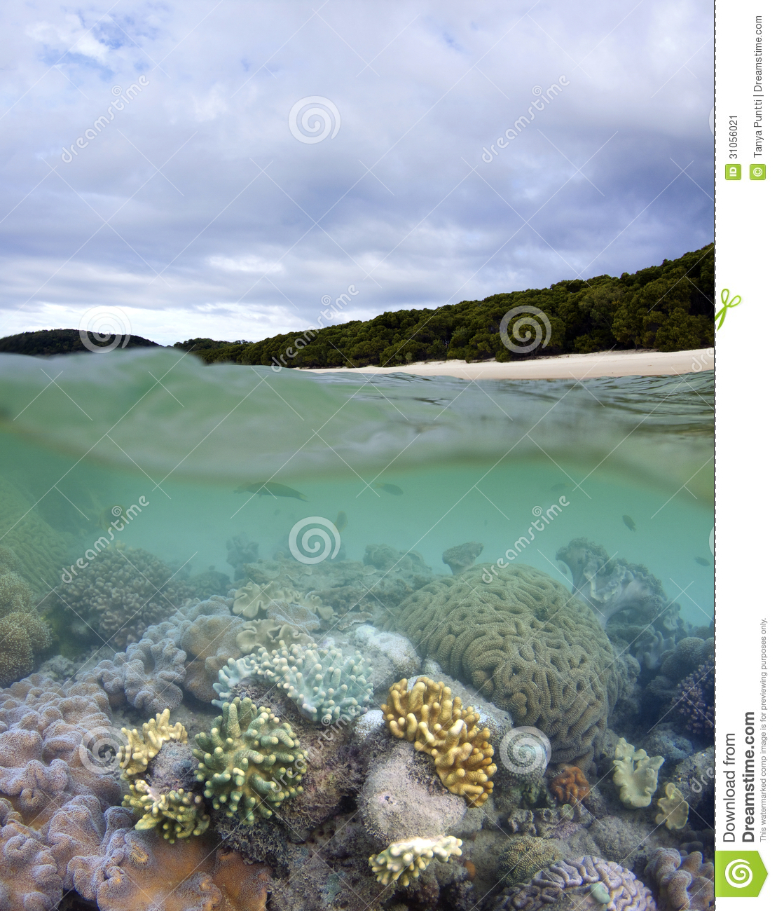 Whitehaven Beach And Living Coral Reef Stock Image
