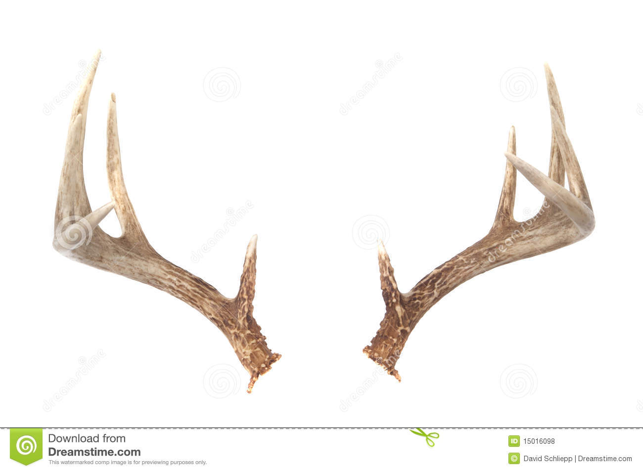 antlers single men Rustic antler frame with single initial goes perfect in your cabin or lake house hang on a wall, front door, or lean on a shelf details: 18 h 1/2 birch woo.