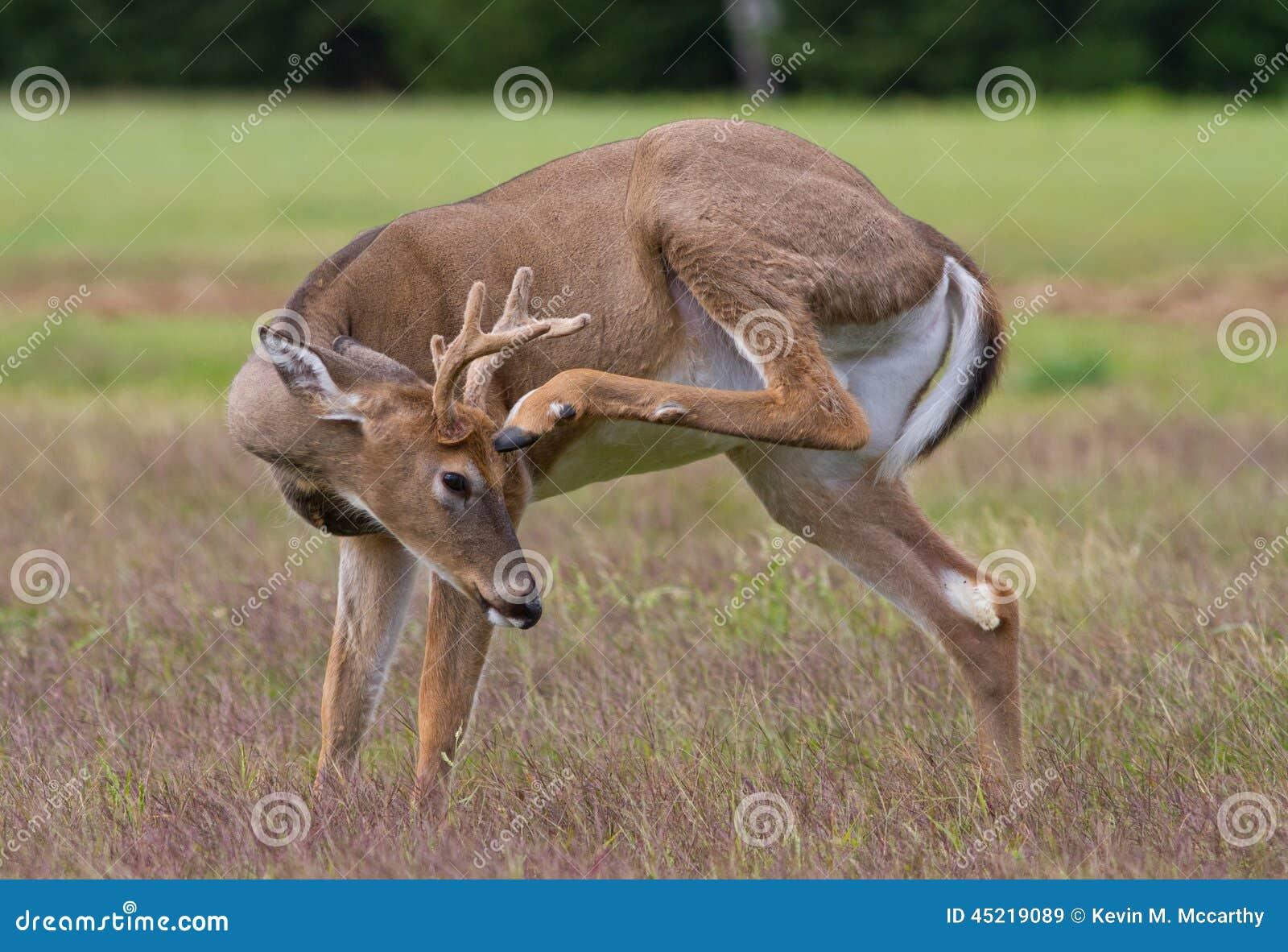 deer hooves - photo #39