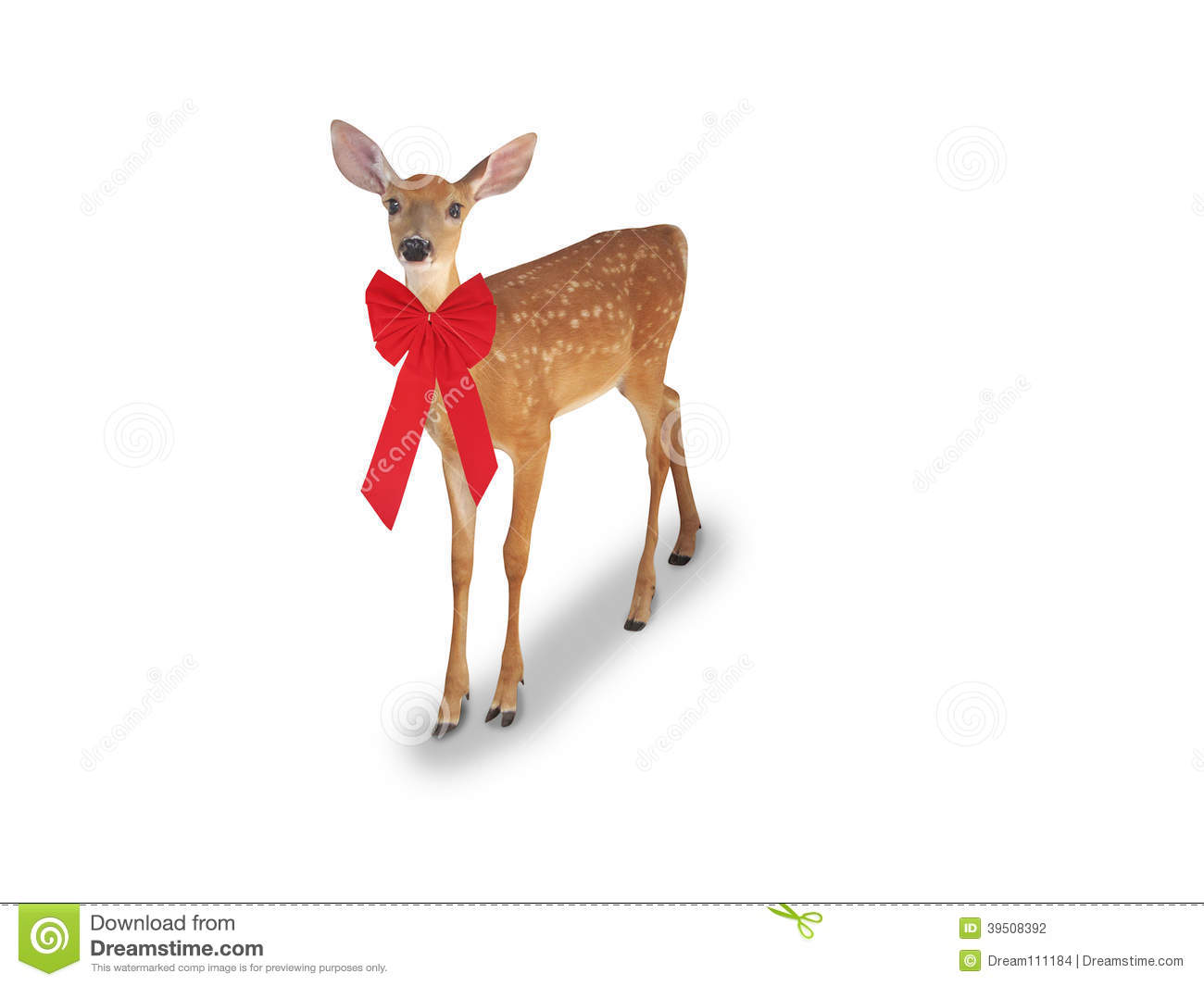 Whitetail Deer Fawn with red bow