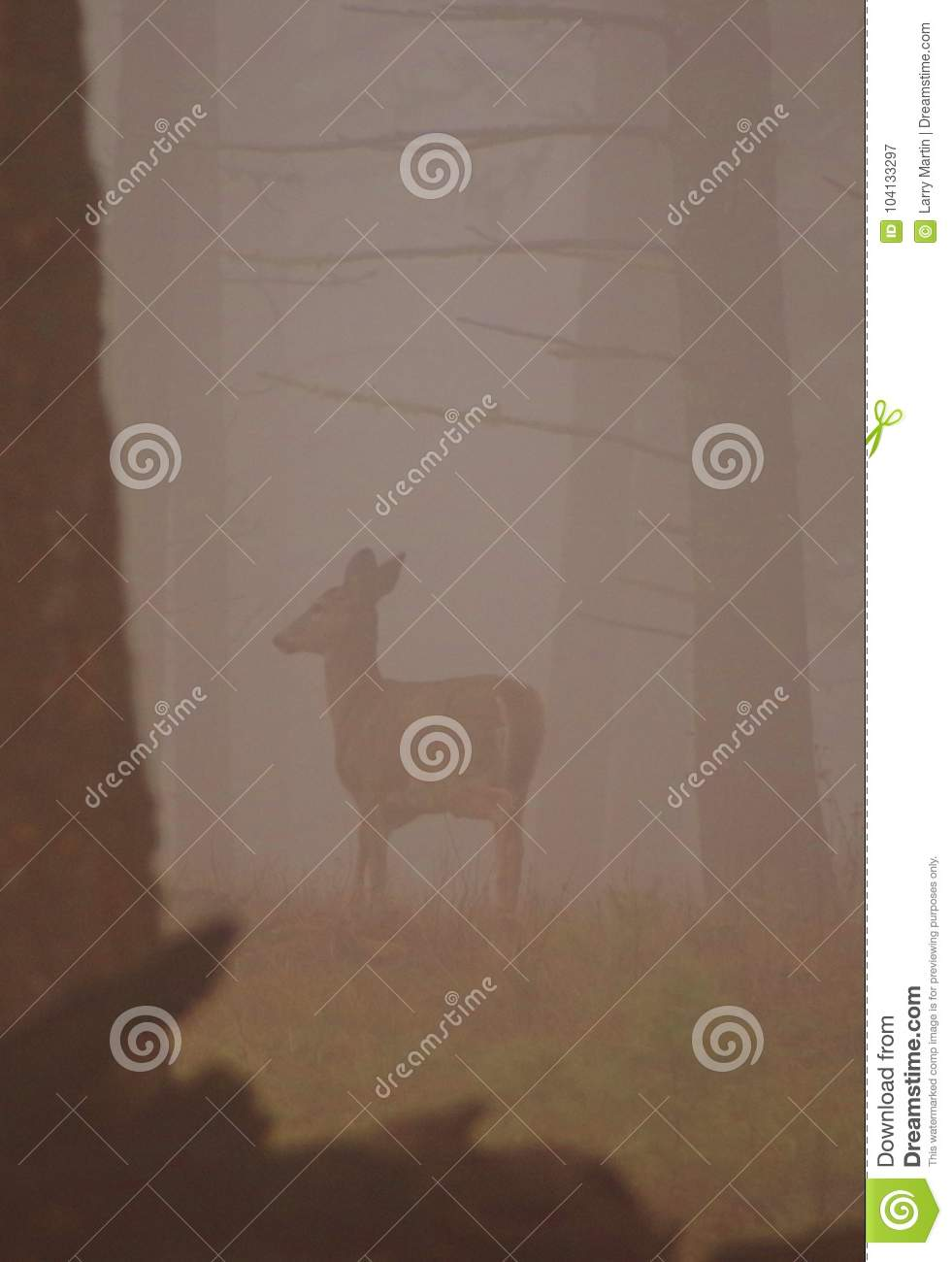 Whitetail doe in the mist, Montana, Sapphire Mountains