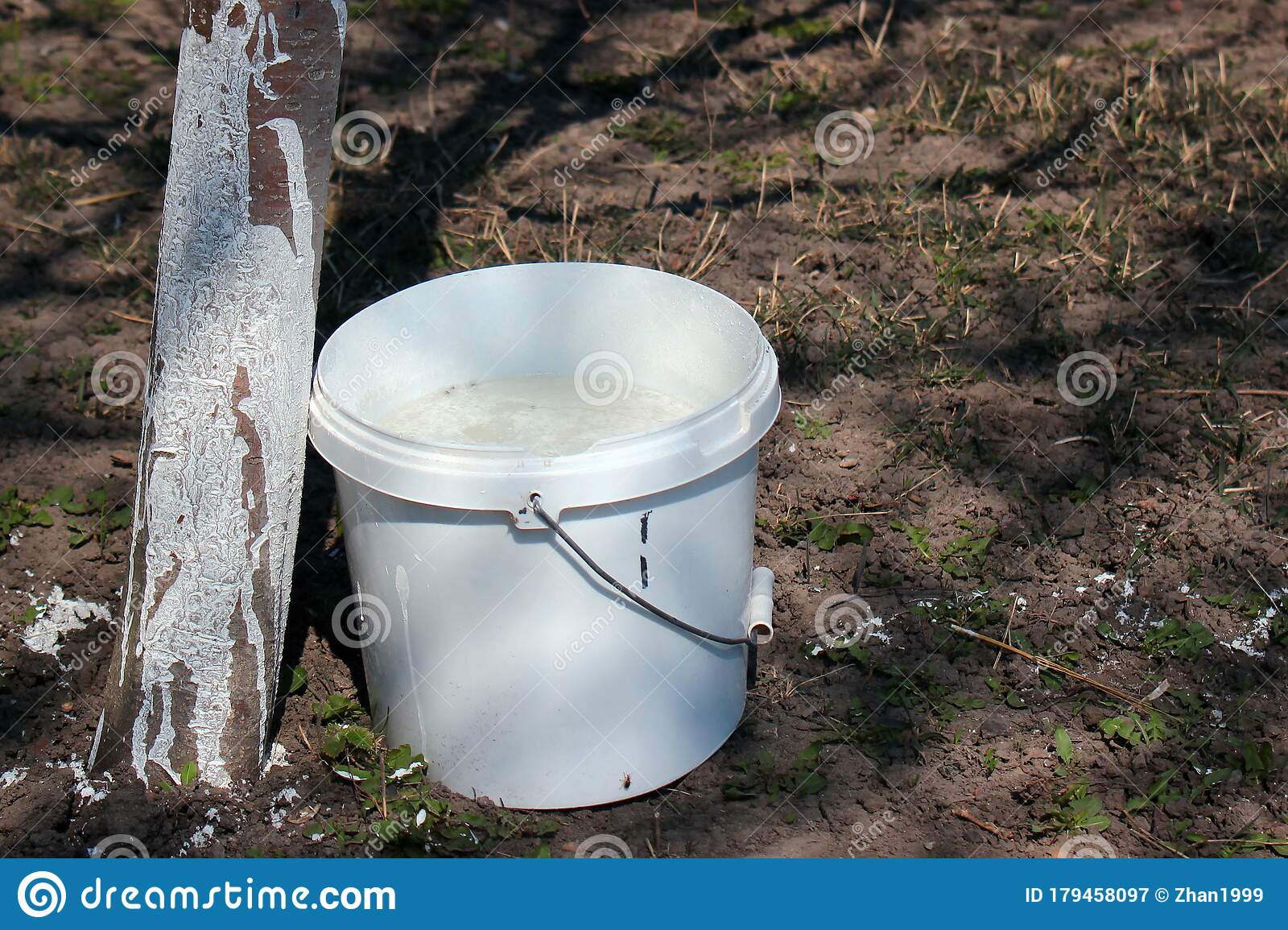 Whitewashing Fruit Trees Bucket With White Paint In A Garden Stock Image Image Of Farmer Preventive 179458097