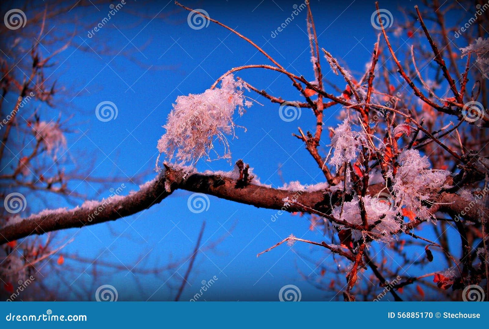 Whoarfrost su un albero