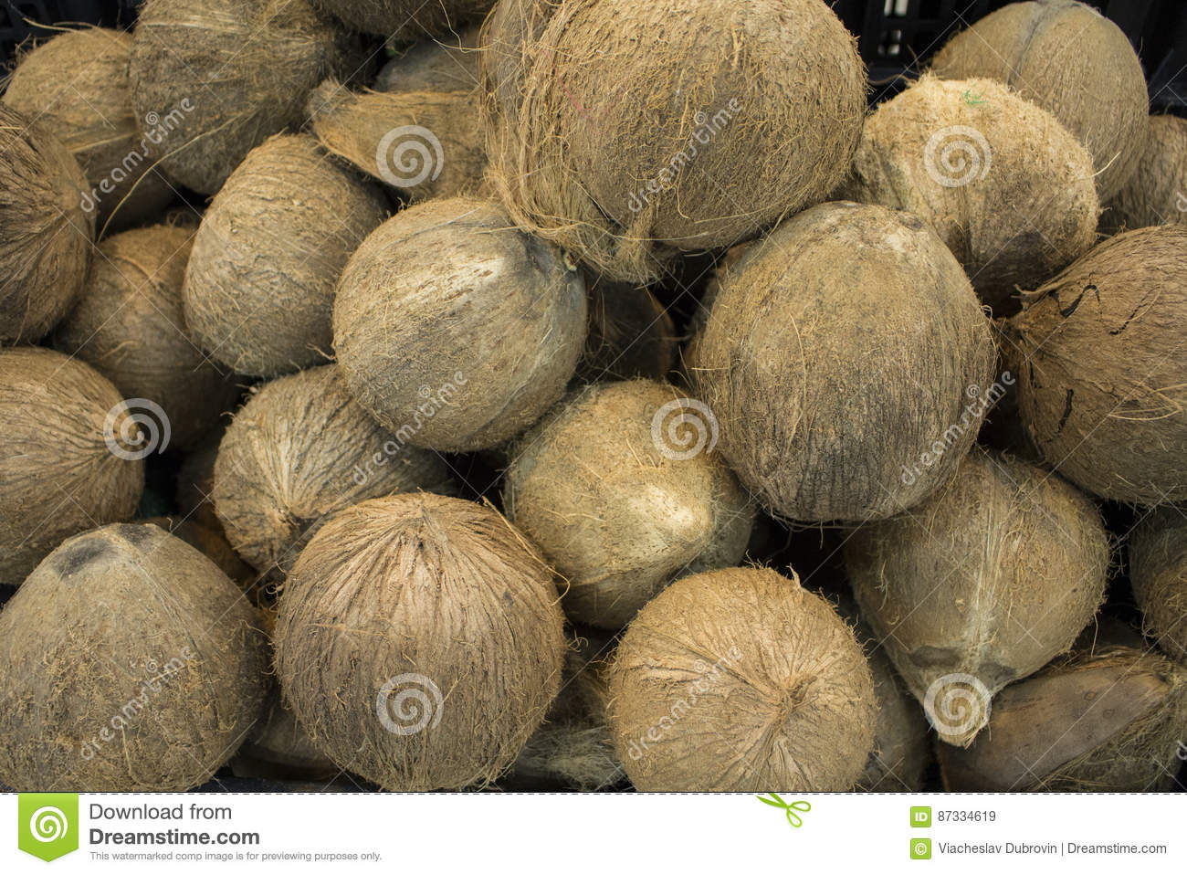 whole coconuts in pile closeup photo. exotic fruit or nut. brown