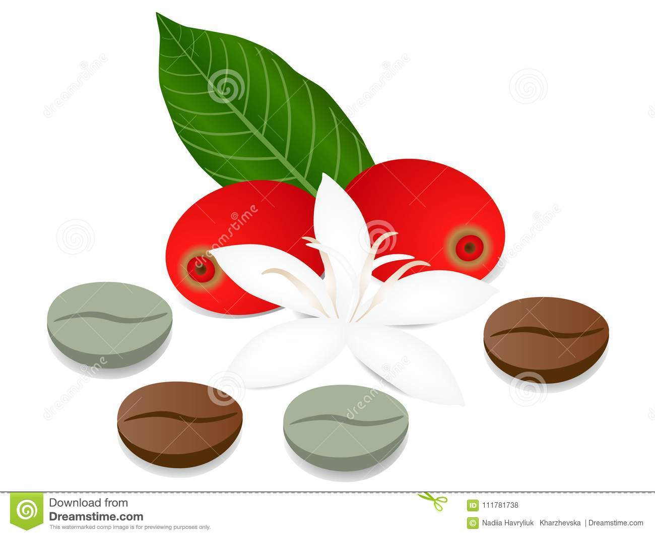 Whole coffee berries, beans and a flower with a leaf isolated on a white background.