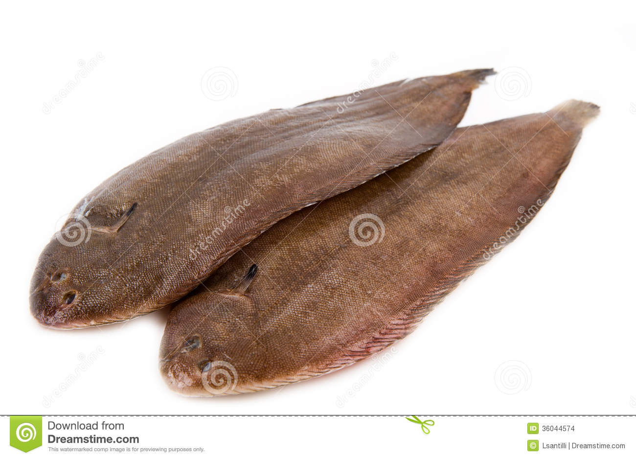 Image gallery sole fish for Dover sole fish