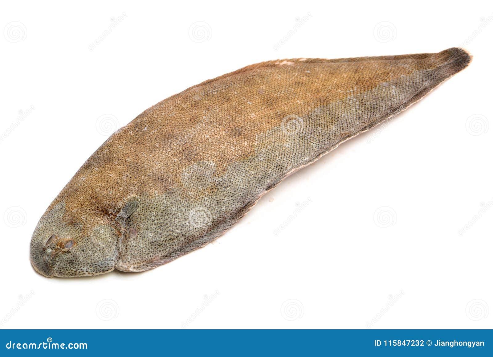 Whole couple fresh sole fish