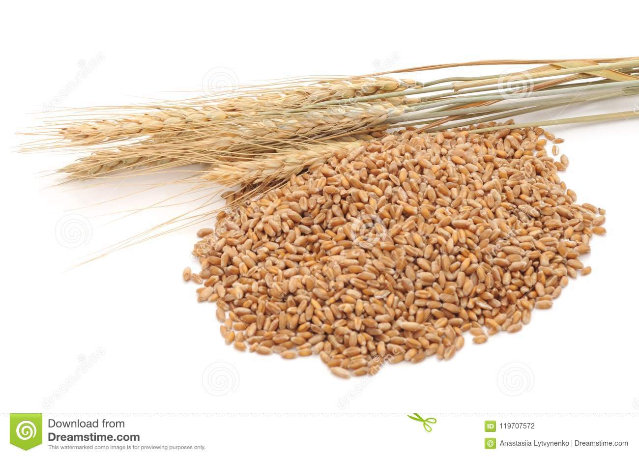Whole grain of wheat  stock photo  Image of little, storage