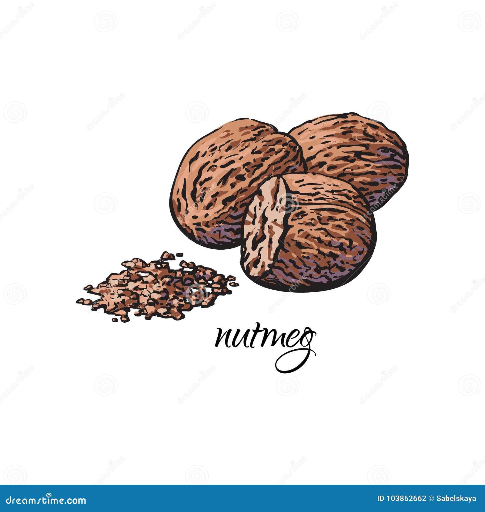Whole and ground fragrant nutmeg with caption