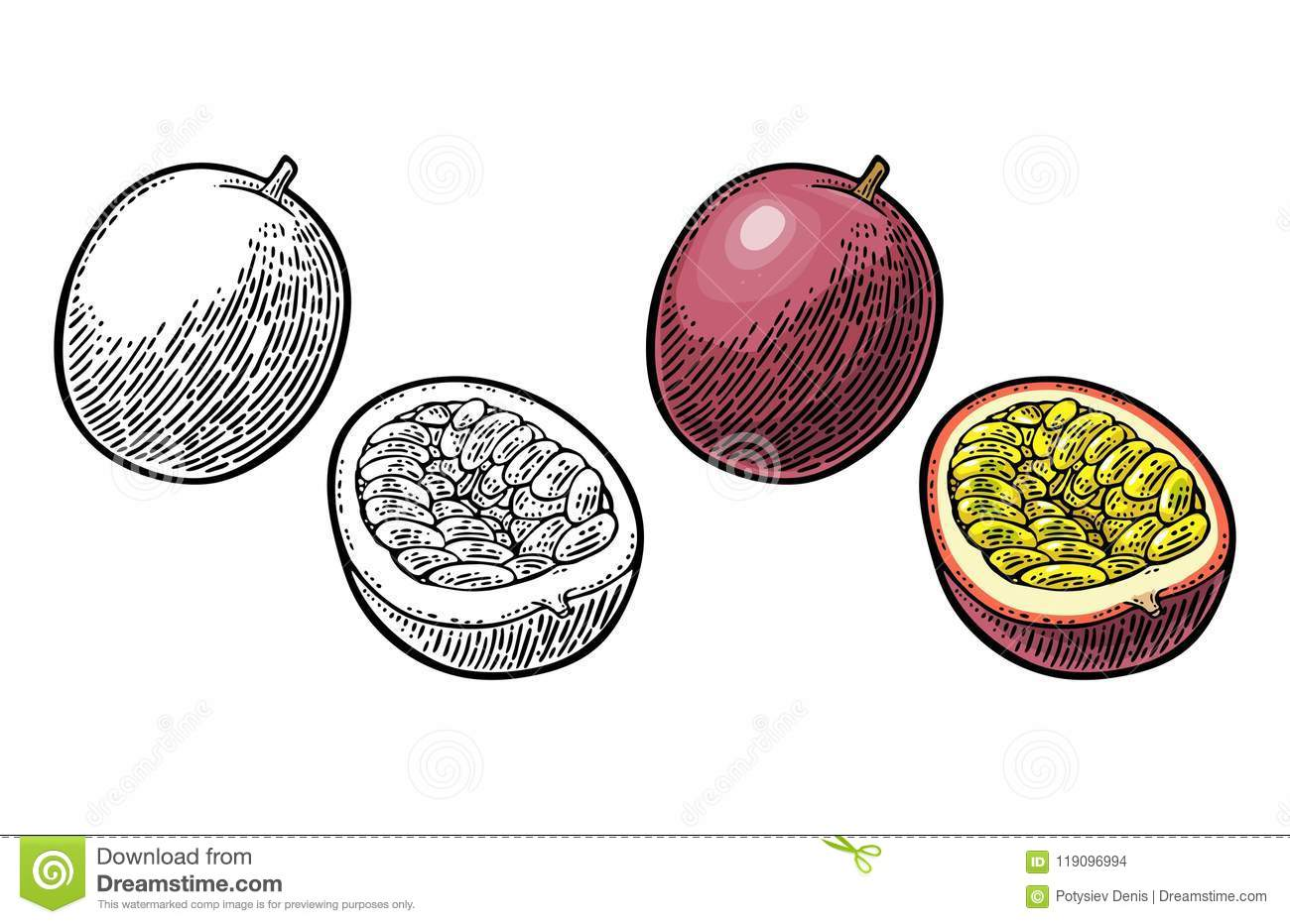 Whole and half maracuya with seed. Vector engraving