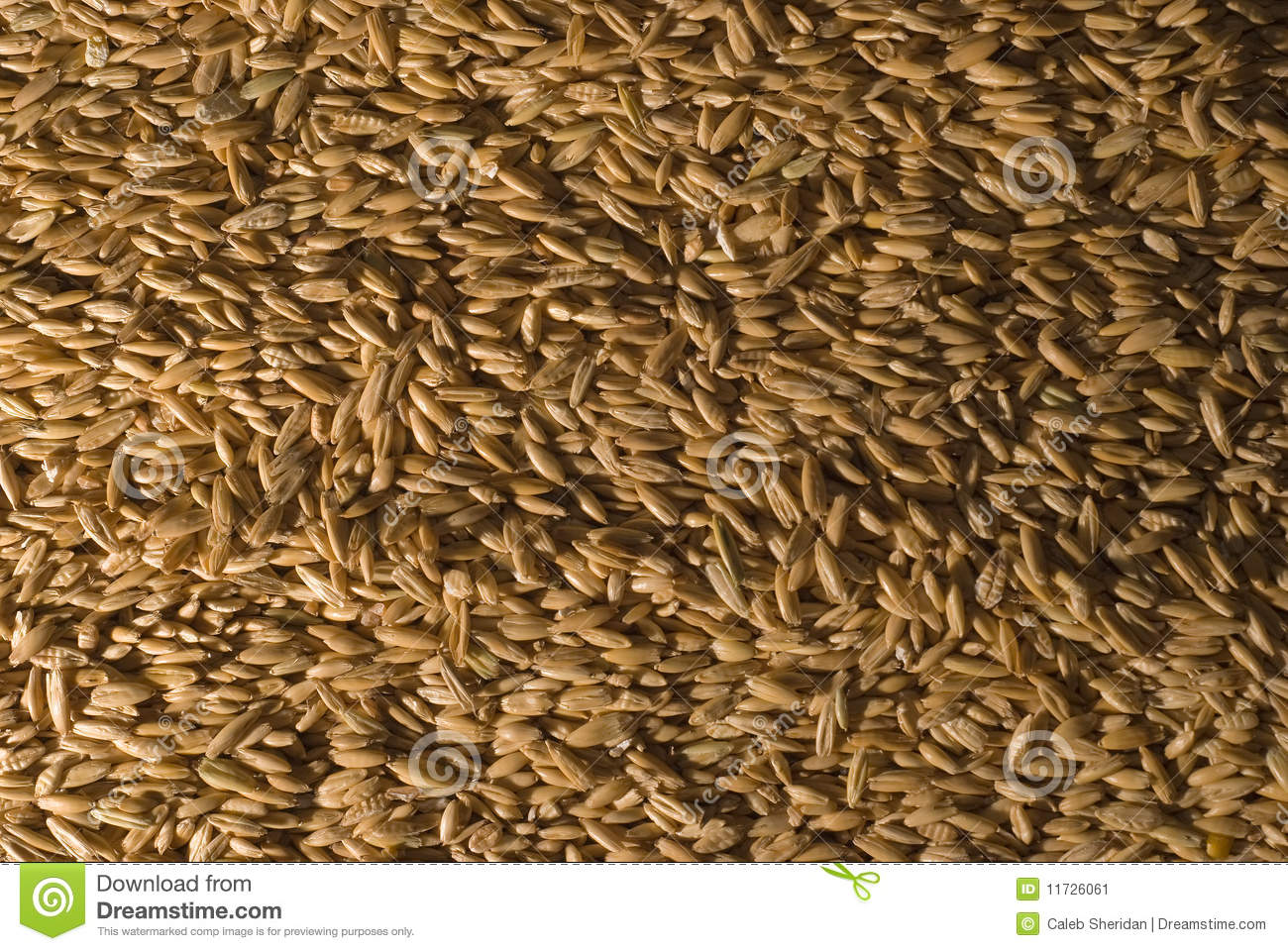 whole oat horse feed stock image image of cereal staple