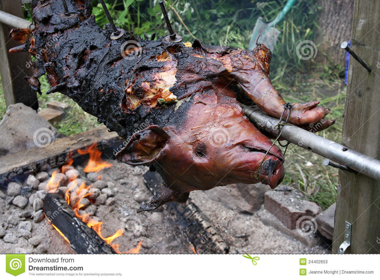 whole pig roasting over a fire stock image image of charcoal
