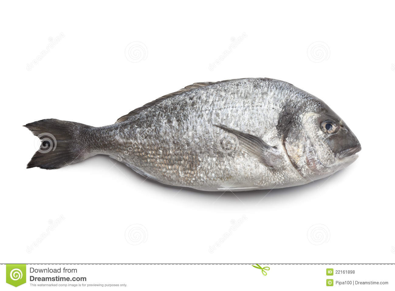 whole single dorade fish royalty free stock photos image Running Shoe Sole Clip Art Clip Art Coming Out of Shoe Soles