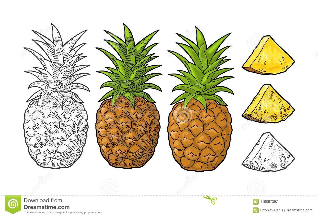 Whole and slice pineapple. Vector black vintage engraving