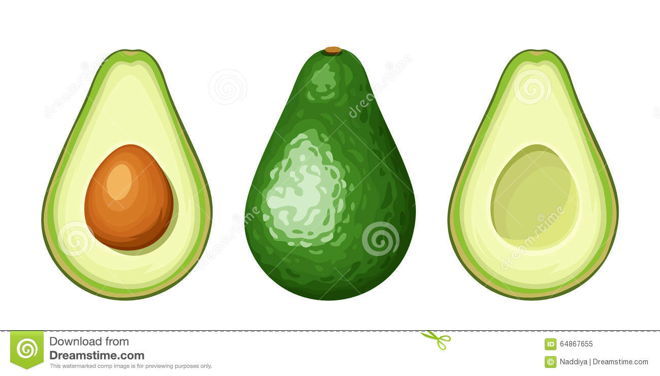 Whole and sliced avocado fruit. Vector illustration.