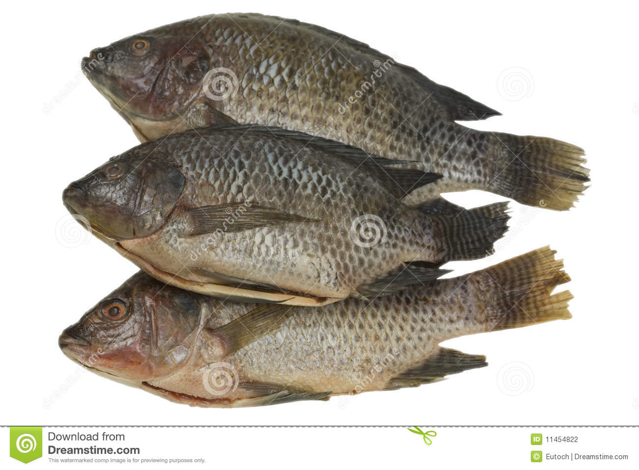Whole tilapia fish stock photo image of fresh path for What is tilapia fish