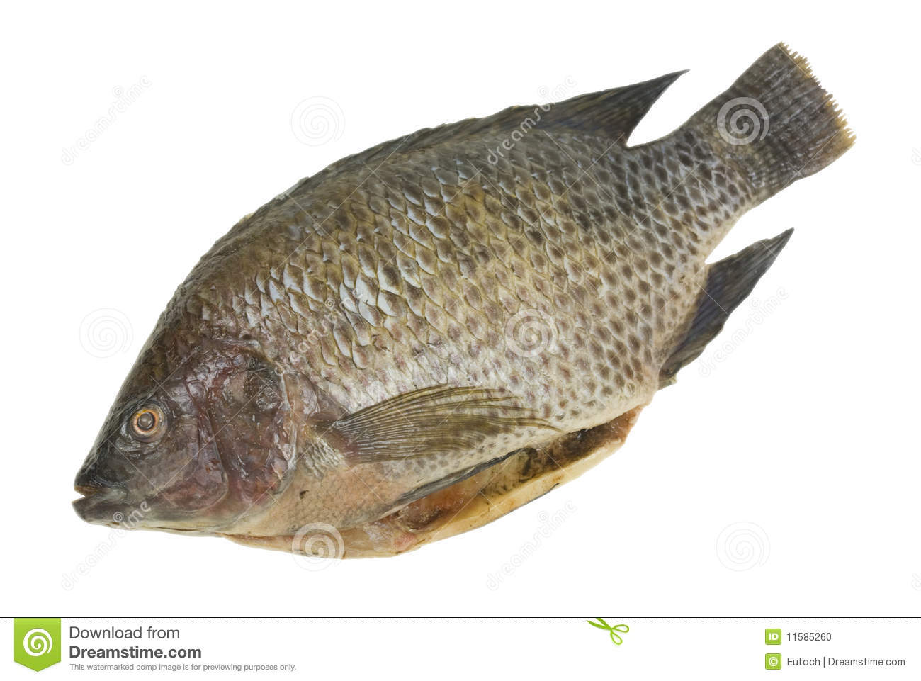 Whole tilapia fish isolated stock photo image 11585260 for Is tilapia a fish