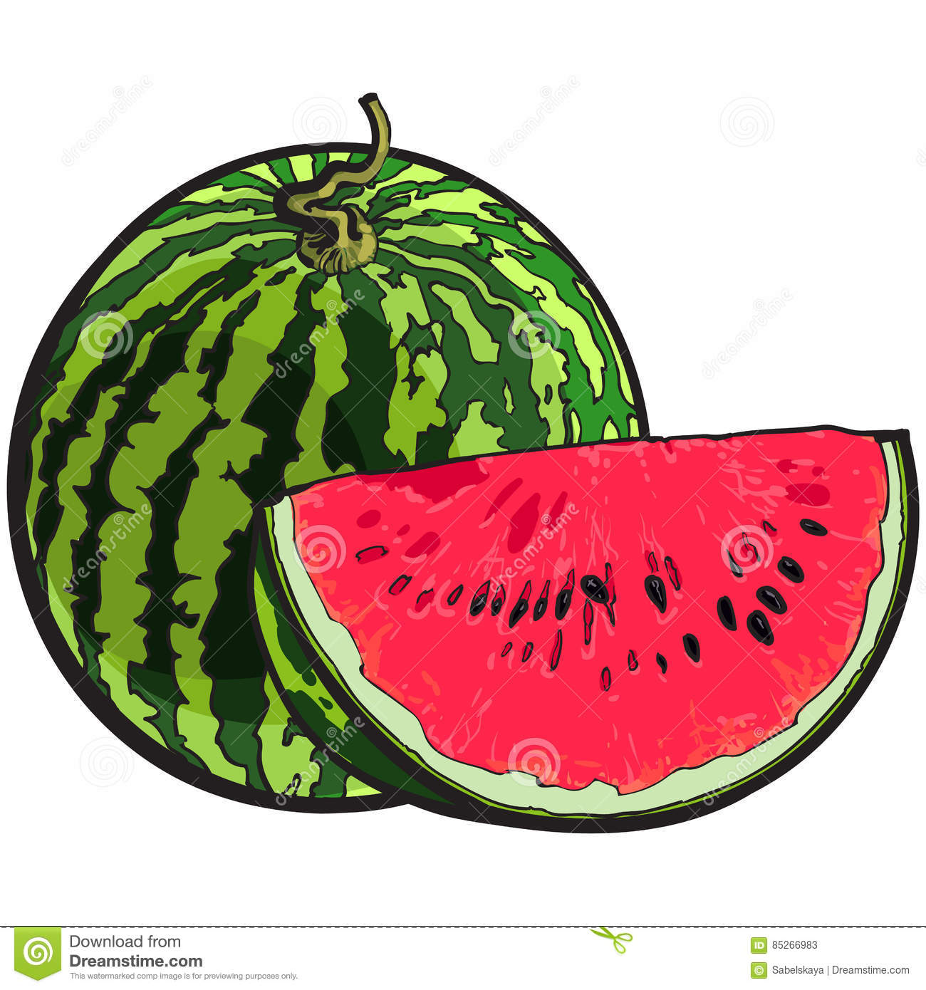 Whole watermelon and red slice with black seeds, sketch illustration