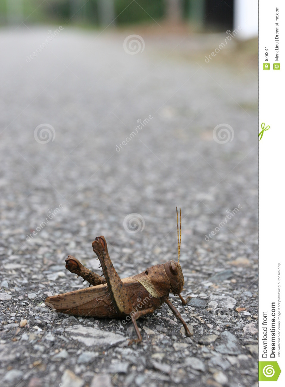 Why did the Cricket cross the road