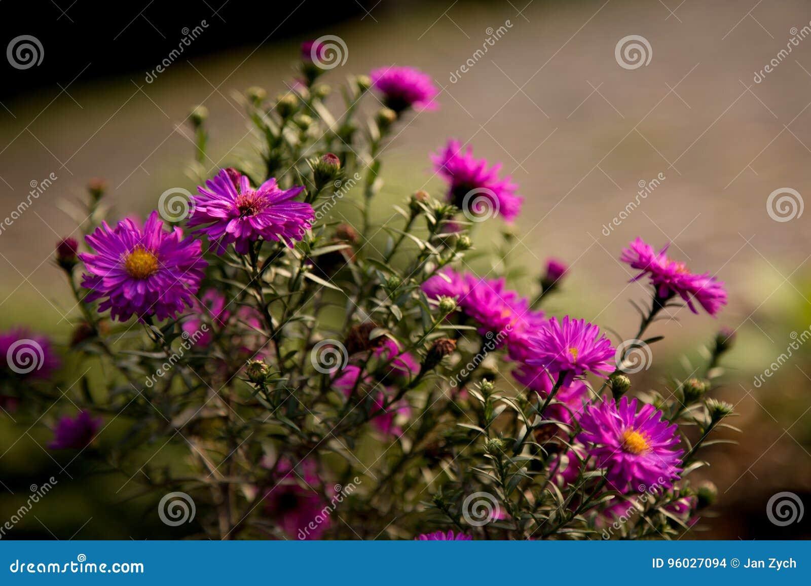 Wiązka kwiaty