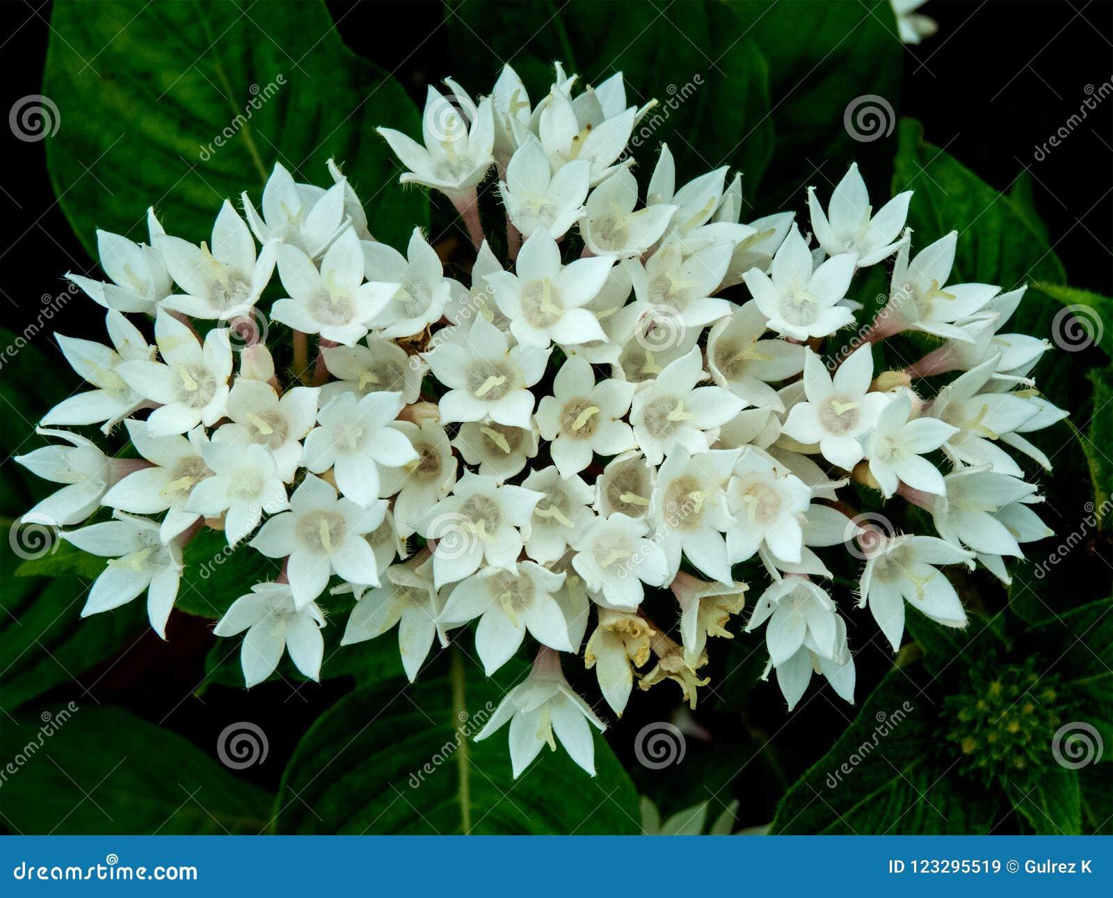 Wiązka piękny mały białych kwiatów okwitnięcie