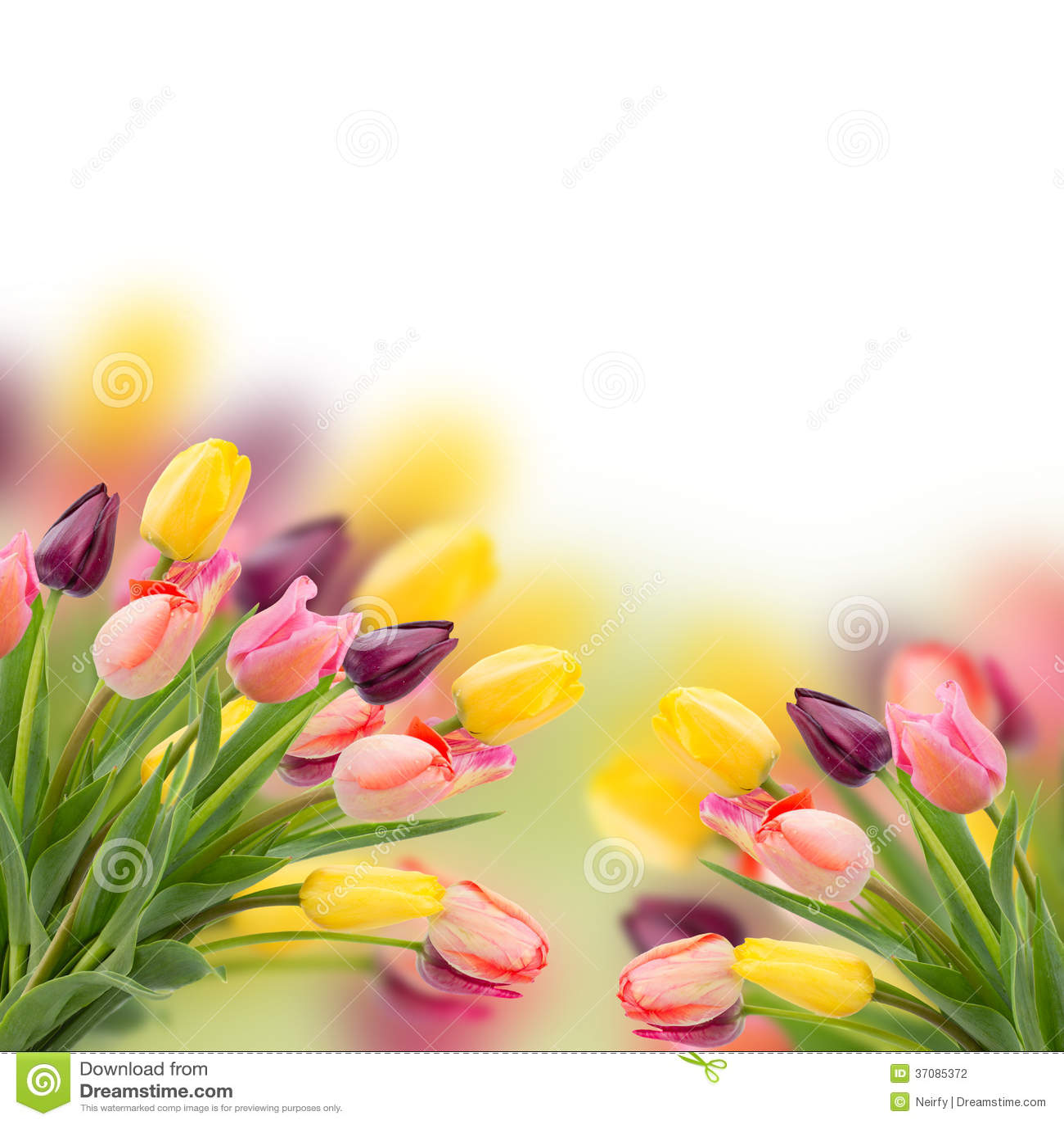 Download Wiązka Tulipanów Kwiatów Zamknięty Up Zdjęcie Stock - Obraz złożonej z odosobniony, kwiat: 37085372