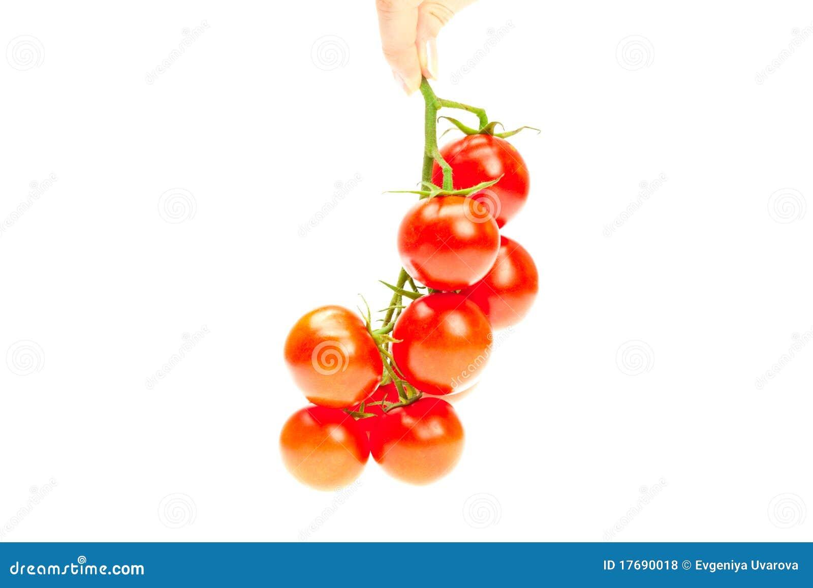 Wiązki ręka odizolowywający mężczyzna pomidorowy biel twój