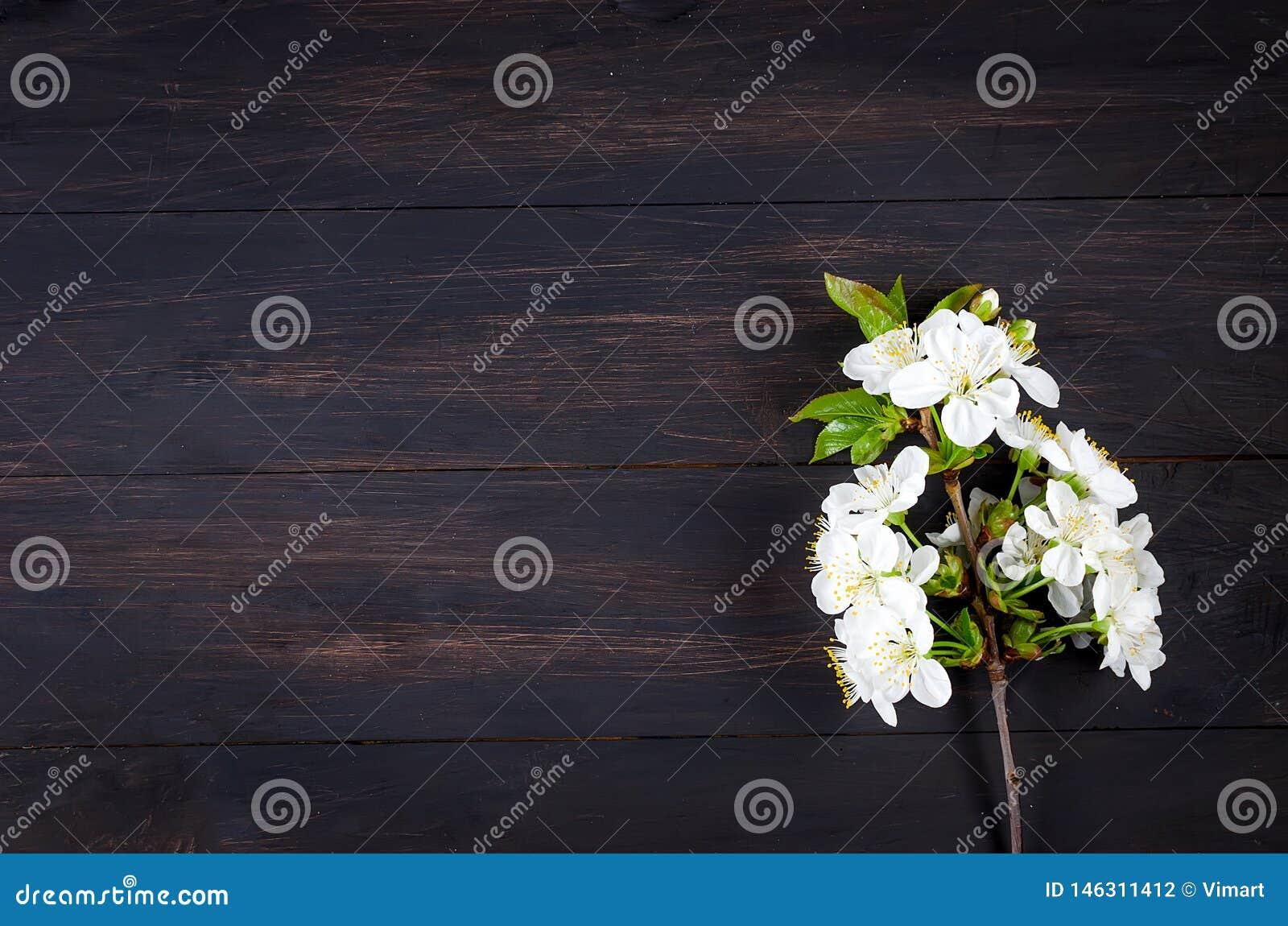 Wiśnia kwitnie na ciemnym drewnianym tle