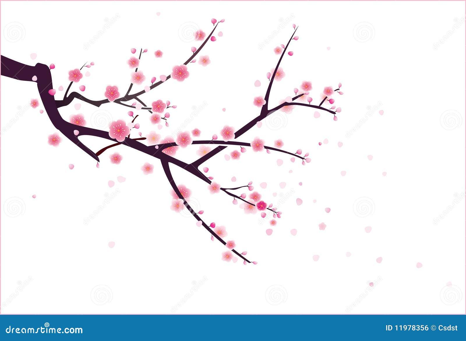 Wiśnia lub okwitnięcie śliwkowy wzór