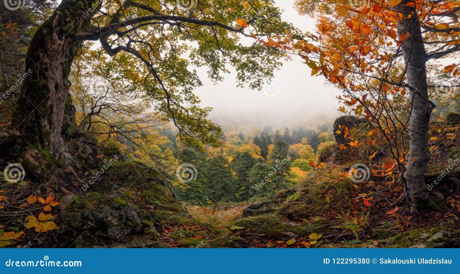 Wi panorâmicos de Misty Valley And Colorful Autumn Forest Enchanted Autumn Foggy Forest da montanha de Autumn Forest Landscape Wi