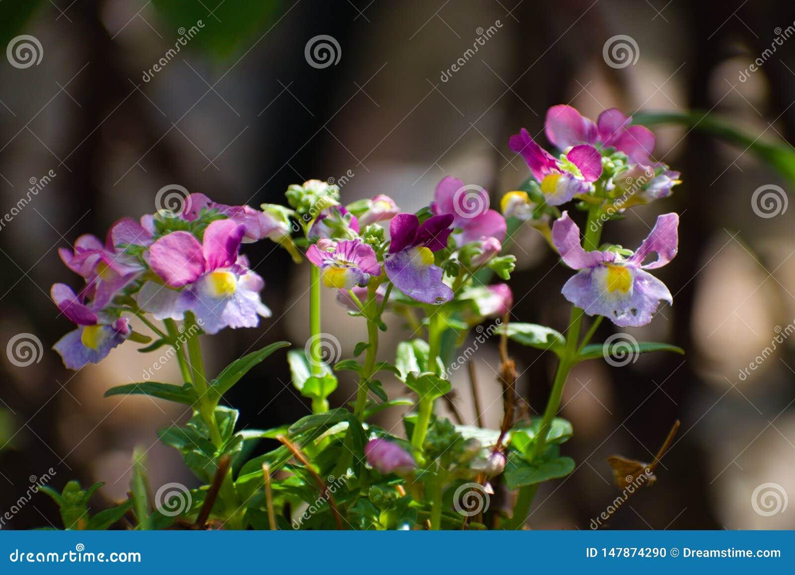 Wi?zka kwiaty