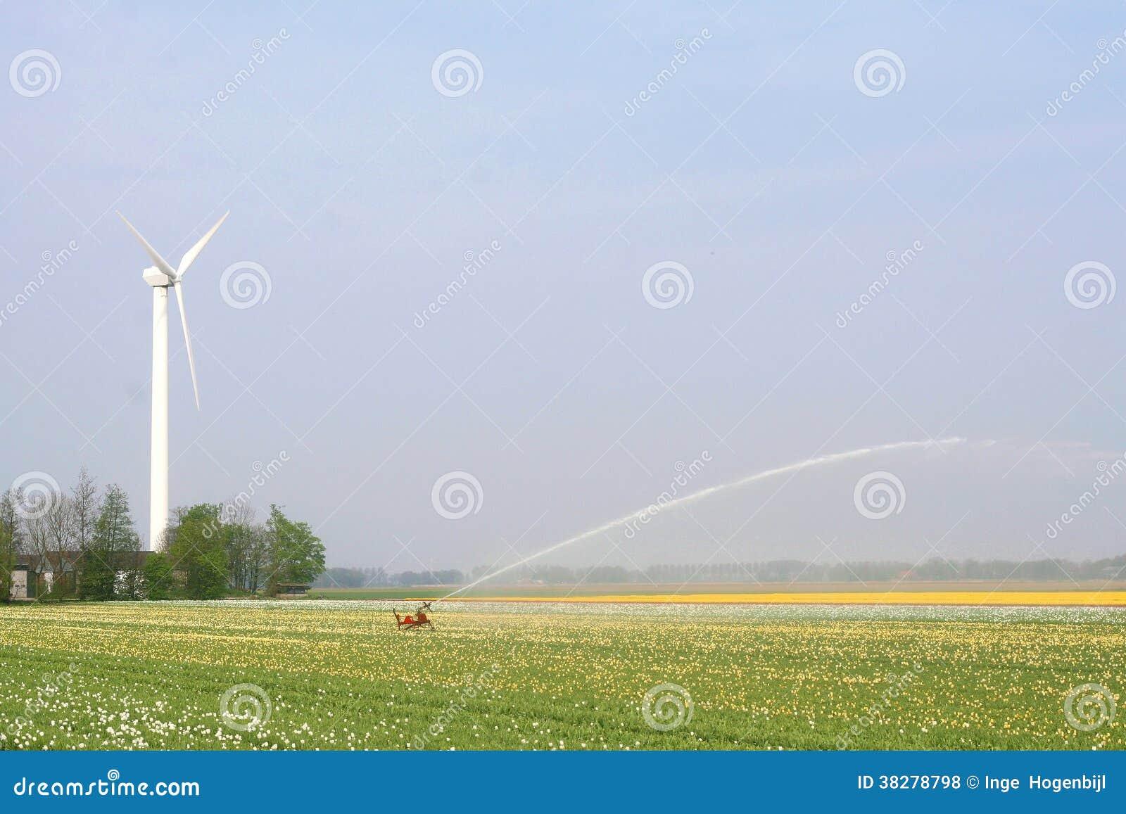 Wiatraczek zapewnia energię dla irygować tulipanowych pola w Północno-wschodni polderze, holandie