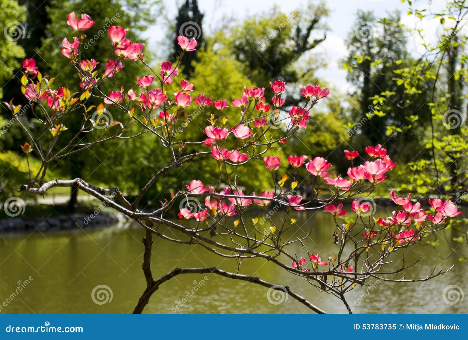 Wibrujący wiosny kwitnienie