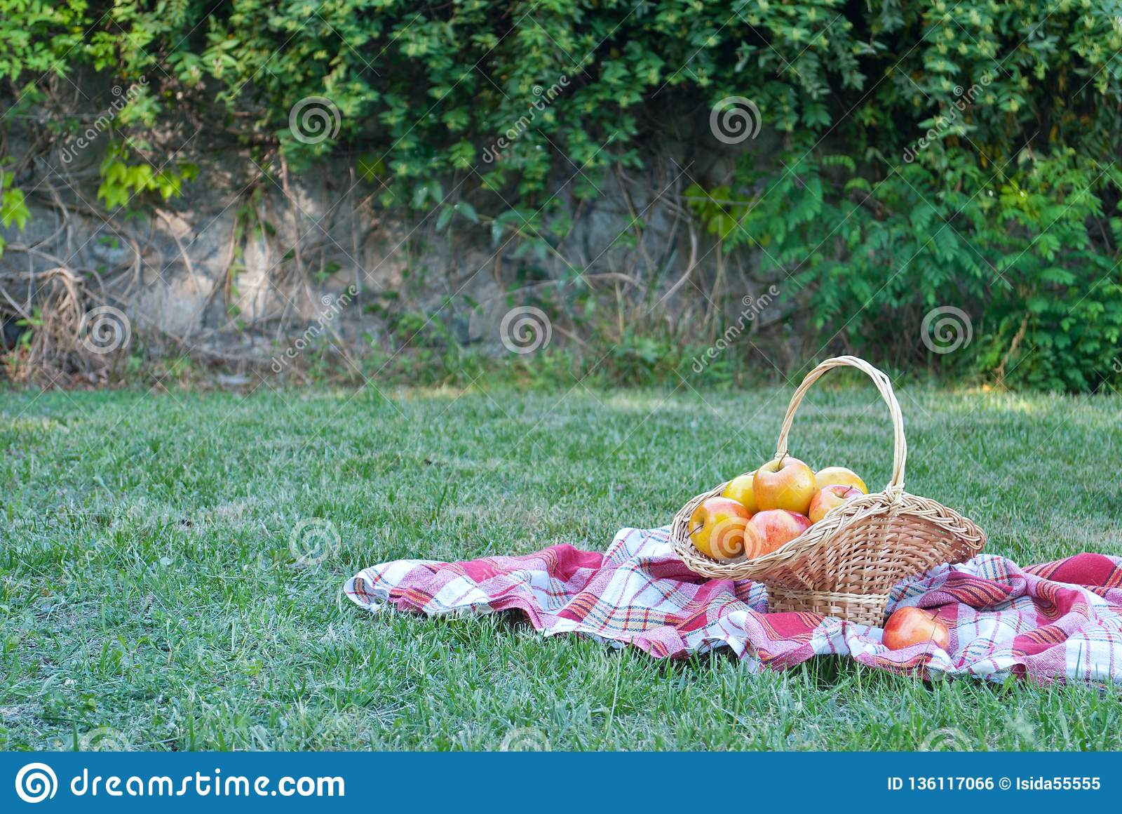 Wicker basket is woven of vines with apples on the background of green grass tablecloth, cloth in a cage towel, red ripe yellow fr