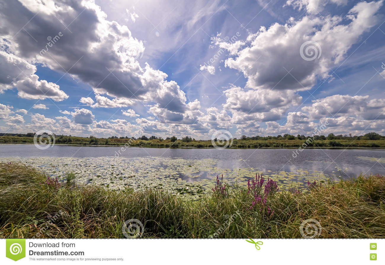 Wide angle view of a summer swamp and cloud reflections in water among yellow water lilies