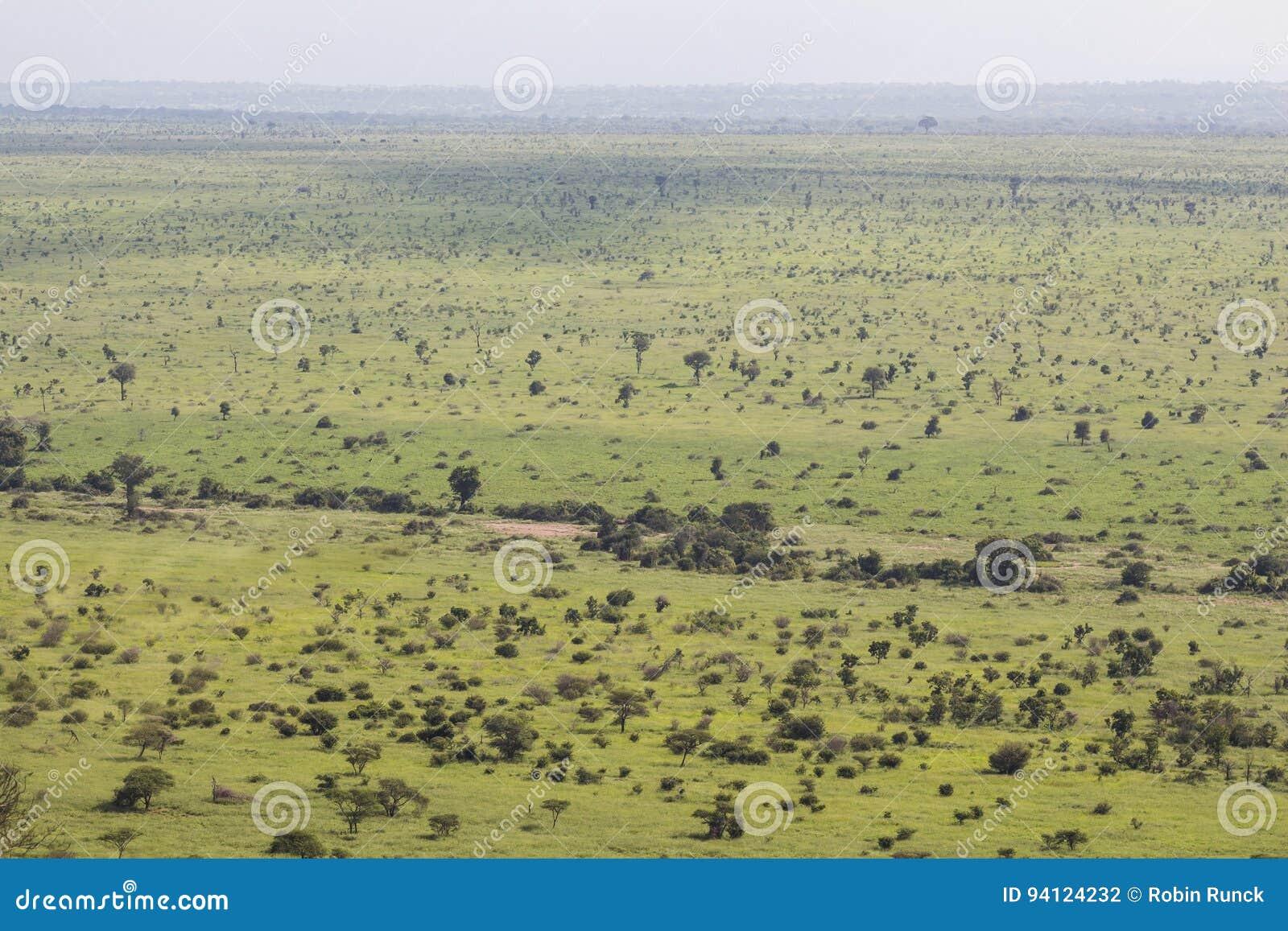 Wide and green landscape view of Kruger National Park