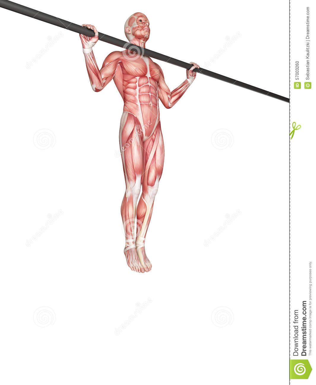 Wide grip pull ups