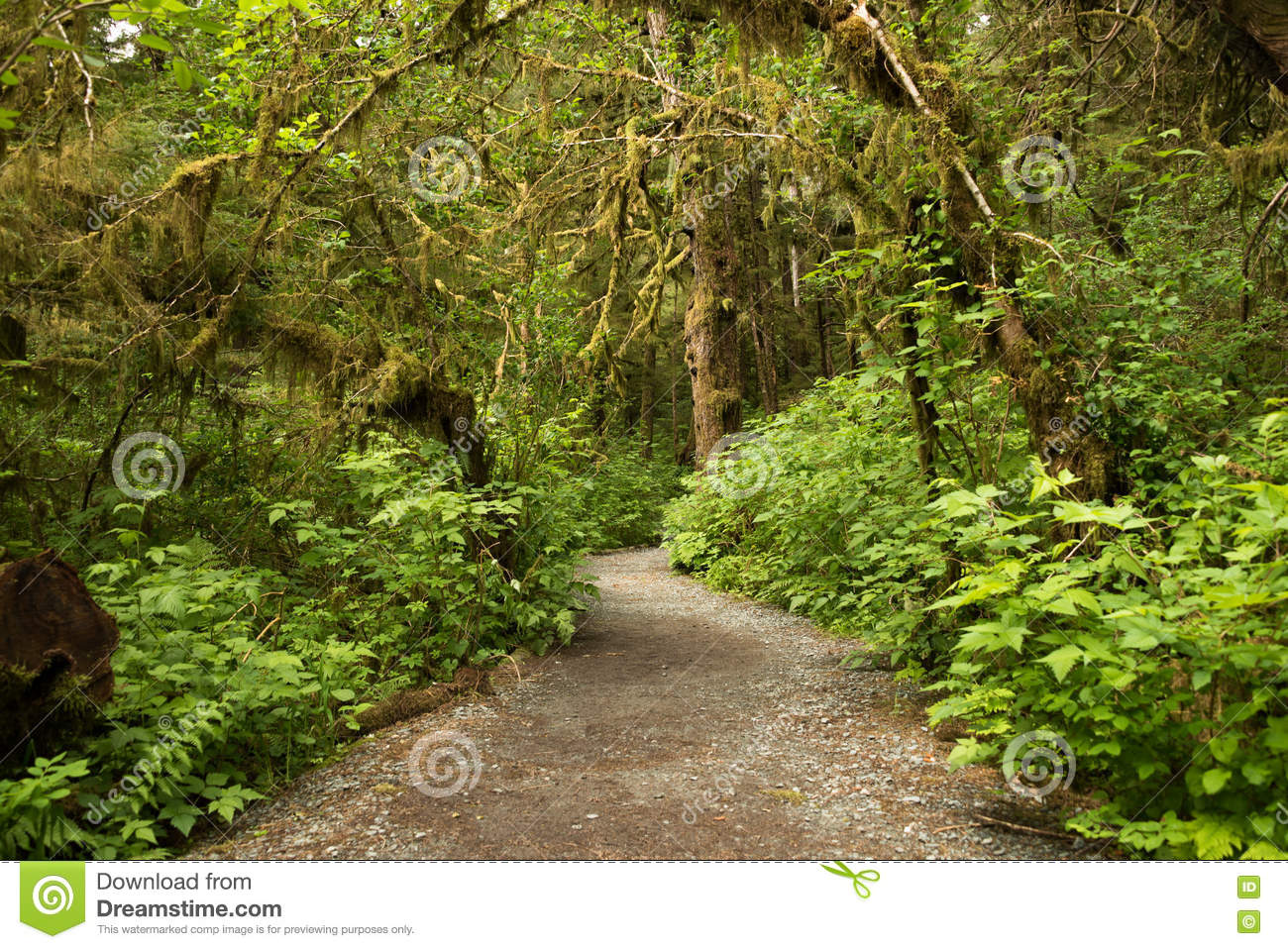 Wide path leading into rainforest in Tongass National Forest, Alaska