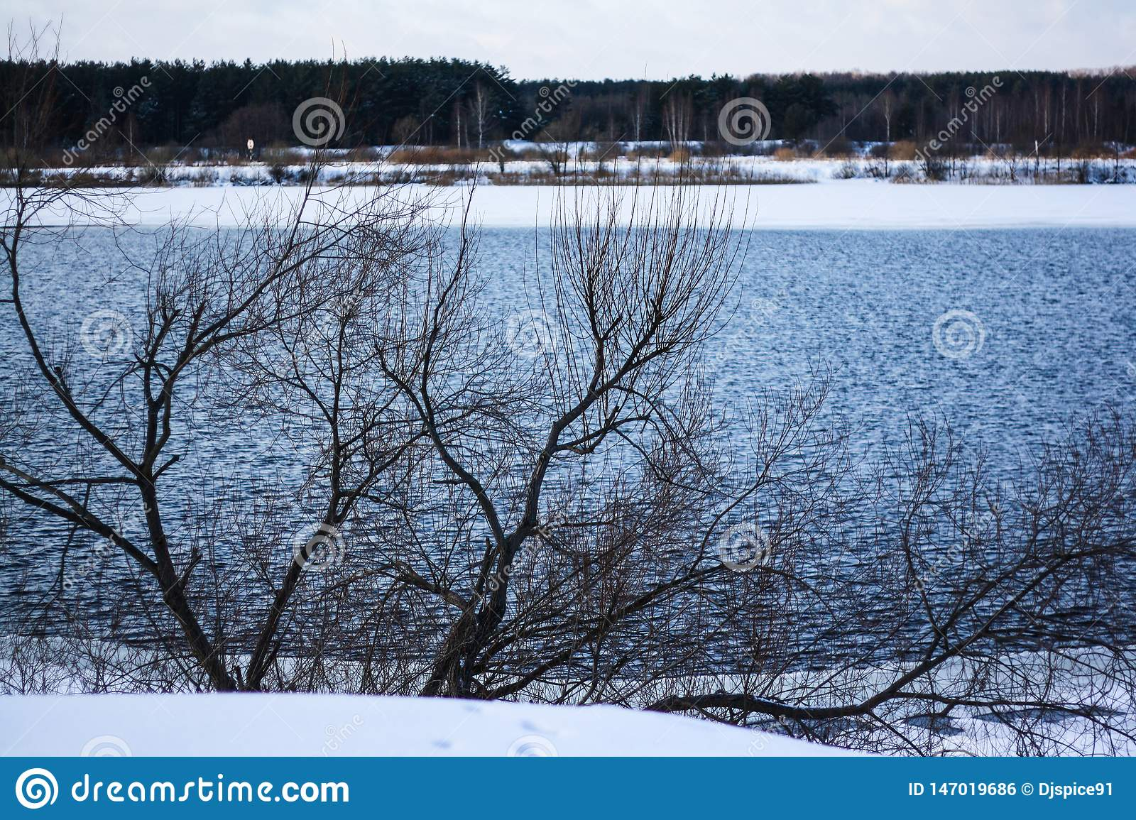 Wide river in winter forest
