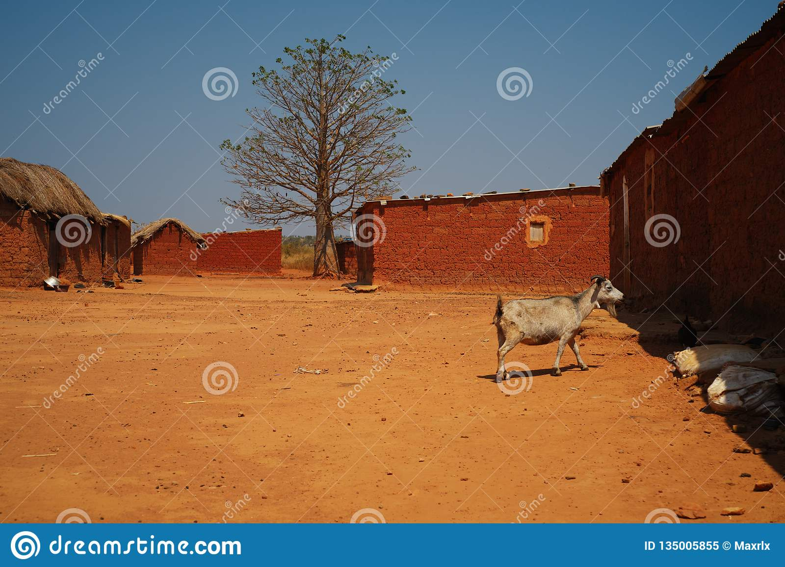 Wide view of goat in Malanje village, Angola