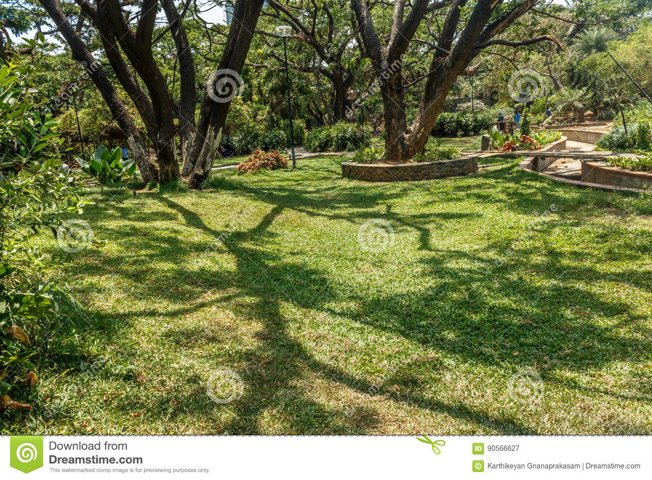 Wide View Of Green Garden With Grass Trees Plants Shadows And