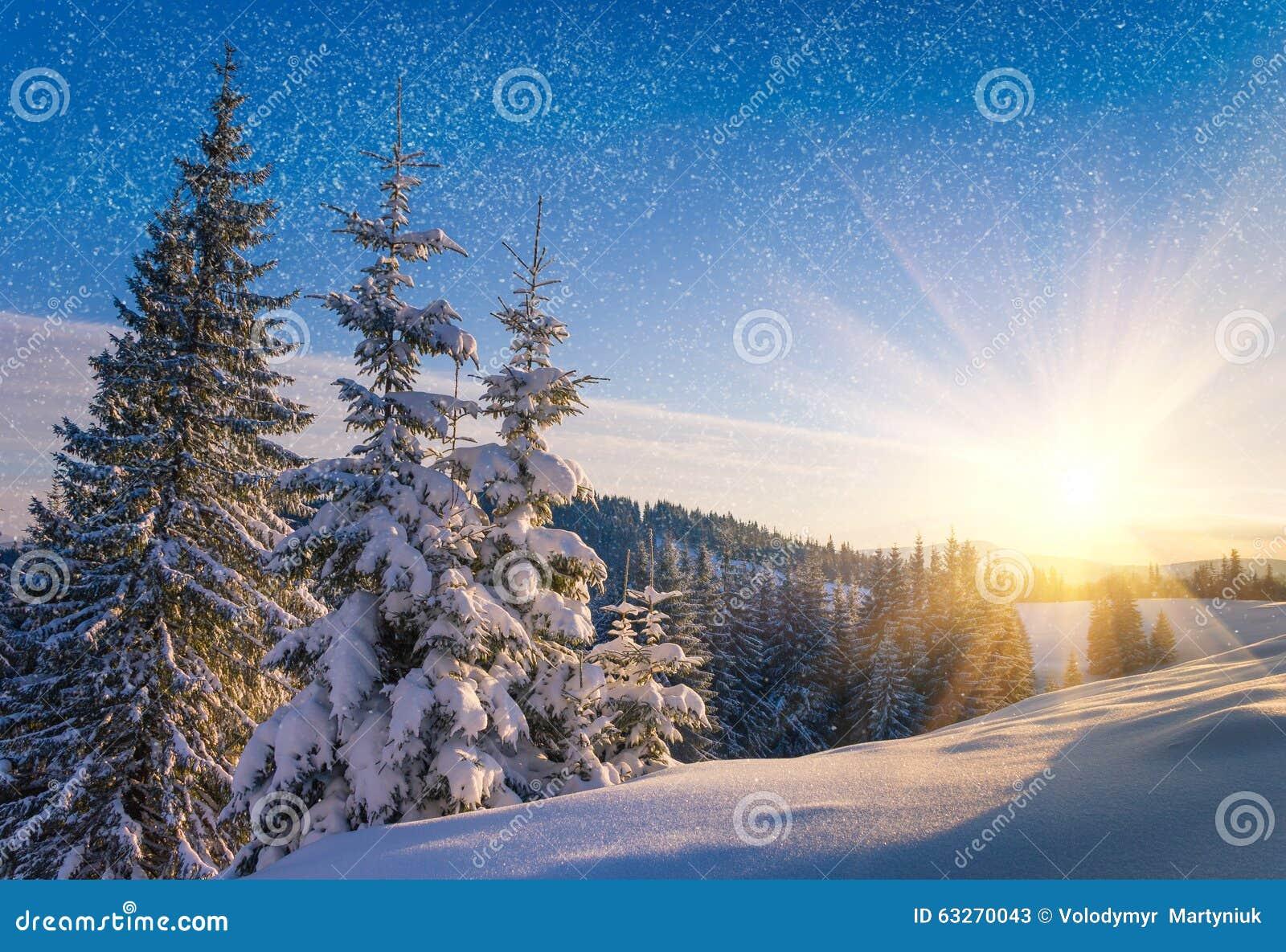 Widok śnieżyści conifer drzewa i śnieżni płatki przy wschodem słońca Wesoło Christmas lub nowego roku tło