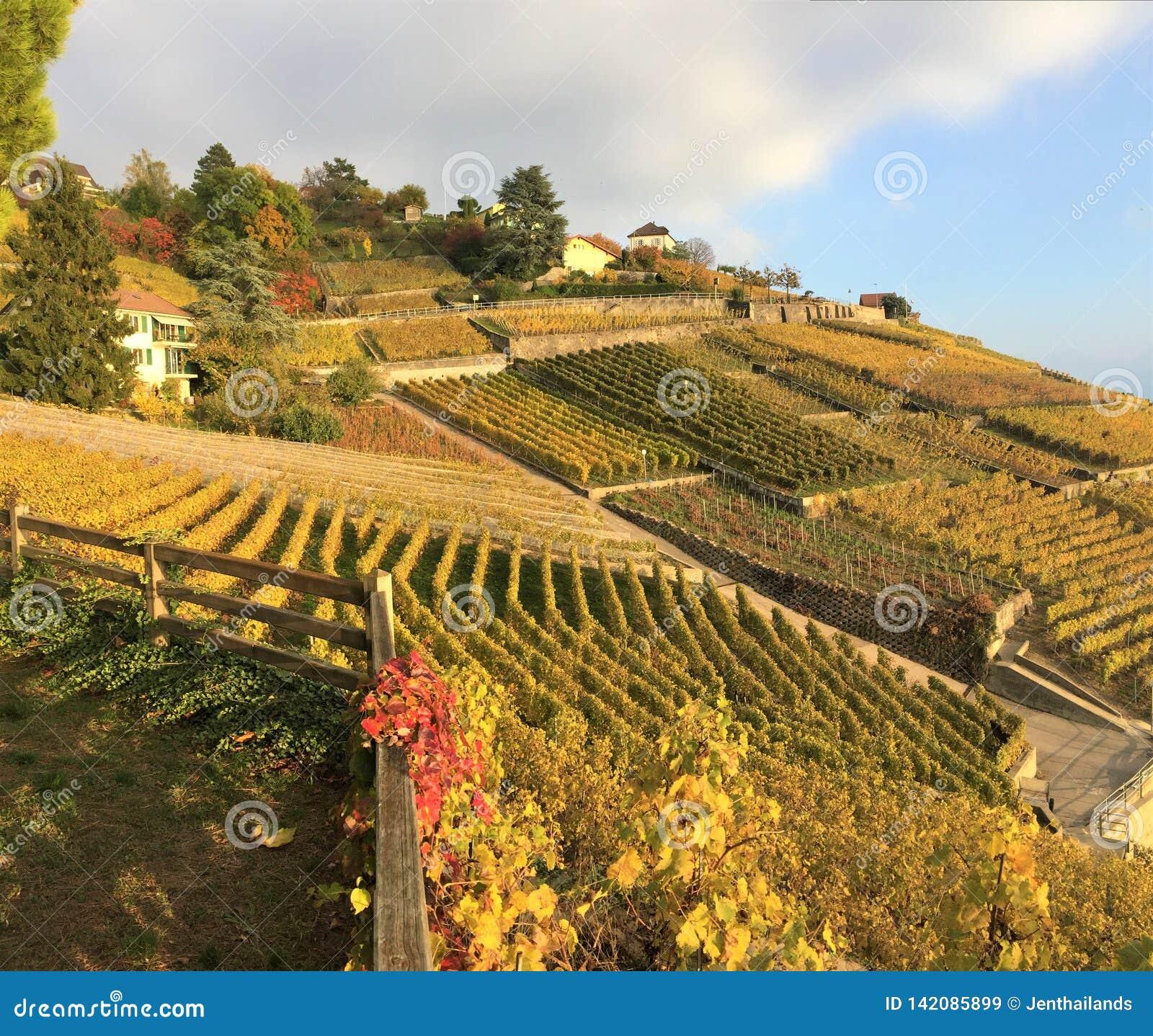 Widok Lavaux tarasy, Szwajcaria